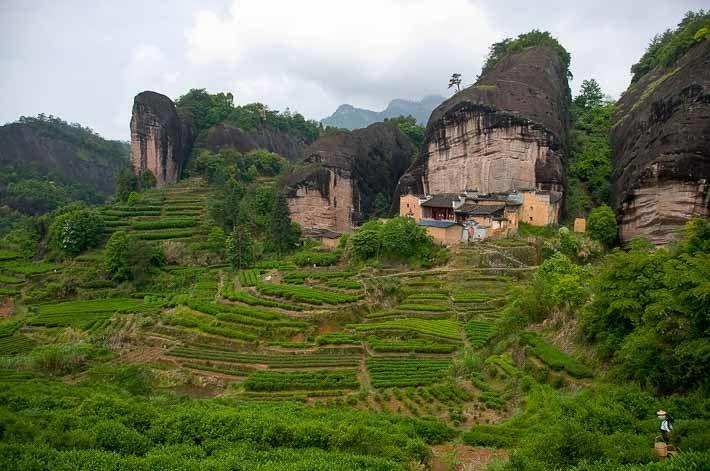 Čajové plantáže v horách Wu-i
