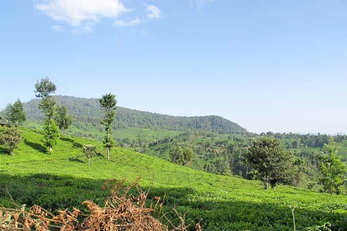 Nyambene Hills